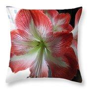 Amaryllis In Bloom Throw Pillow