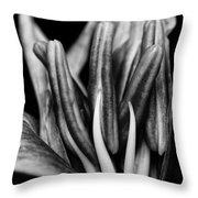 Amaryllis In Bw Throw Pillow
