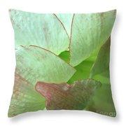 Amaryllis Petals Throw Pillow