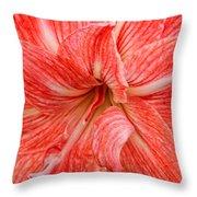 Amaryllis Undefined  Throw Pillow