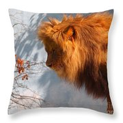 Amazing Male Lion Throw Pillow