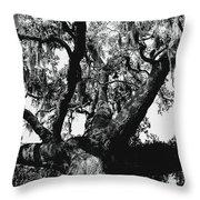 Amazing Oak Tree Throw Pillow