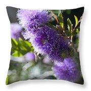 Amazing Purple Melaleuca  Throw Pillow