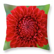 Amazingly Perfect Throw Pillow