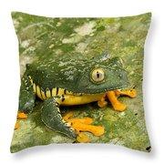 Amazon Leaf Frog Throw Pillow