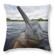 Amazon River Dolphin Spy-hopping Rio Throw Pillow