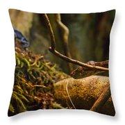Amazon Tree Boa Throw Pillow