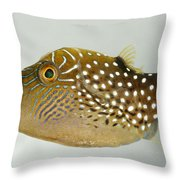 Ambon Toby II Throw Pillow