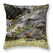 American Alligator Print Throw Pillow