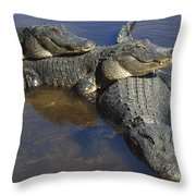 American Alligators In Shallows Florida Throw Pillow