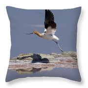 American Avocet Throw Pillow