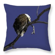 American Bald Eagle 1 Throw Pillow