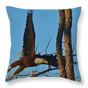 American Bald Eagle I Mlo Throw Pillow