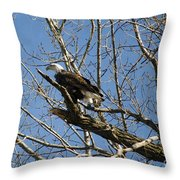 American Bald Eagle In Illinois Throw Pillow
