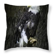 American Bald Eagle Throw Pillow by LeeAnn McLaneGoetz McLaneGoetzStudioLLCcom