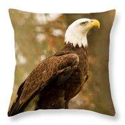 American Bald Eagle Resting Throw Pillow by Douglas Barnett
