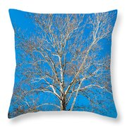 American Beech Throw Pillow