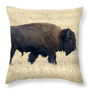American Bison Bull Grand Teton Np Throw Pillow