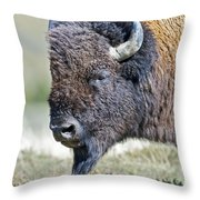 American Bison Closeup Throw Pillow