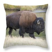 American Bison On The Madison River Throw Pillow