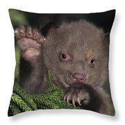American Black Bear Cub Wildlife Rescue Throw Pillow