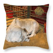 American Brahman Heifer Throw Pillow