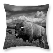 American Buffalo Or Bison In The Grand Teton National Park Throw Pillow