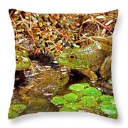 American Bullfrogs Rana Catesbeiana Throw Pillow