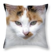 American Calico Cat Portrait Throw Pillow