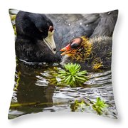 American Coot And Chick Throw Pillow