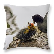 American Coot Feeding Chick Throw Pillow
