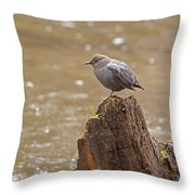 American Dipper   #7879 Throw Pillow