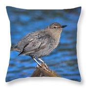 American Dipper Cinclus Mexicanus Throw Pillow