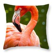 American Flamingo Jacksonville Zoo Florida Throw Pillow