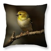 American Gold Finch Throw Pillow
