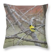 American Goldfinch 1 Throw Pillow by Roger Snyder