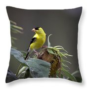 American Goldfinch 5 Throw Pillow