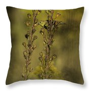 American Goldfinch Eating Seeds Throw Pillow