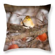 American Goldfinch In Winter Throw Pillow