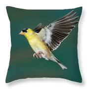 American Goldfinch Male-flying Throw Pillow