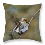 American Goldfinch On A Cedar Twig Throw Pillow