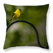 American Goldfinch Perched On A Shepherds Hook Throw Pillow