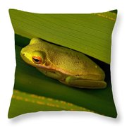 American Green Tree Frog I Mlo Throw Pillow
