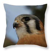 American Kestrel 2 Throw Pillow