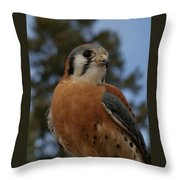 American Kestrel 4 Throw Pillow