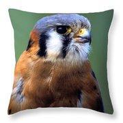 American Kestrel Male Throw Pillow
