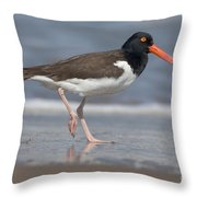 American Oystercatcher On Beach Throw Pillow
