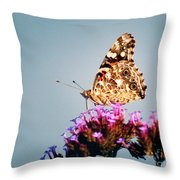 American Painted Lady Butterfly Blue Background Throw Pillow