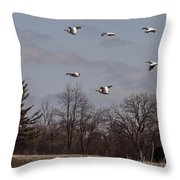 American Pelican Fly-over Throw Pillow
