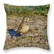 American Pipit Throw Pillow